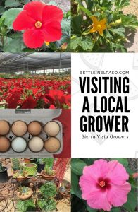 Kids can learn a lot by visiting local growers. We often visit local growers as a family. It is of great fun for our kid as well as us. One such place is Sierra Vista Growers.