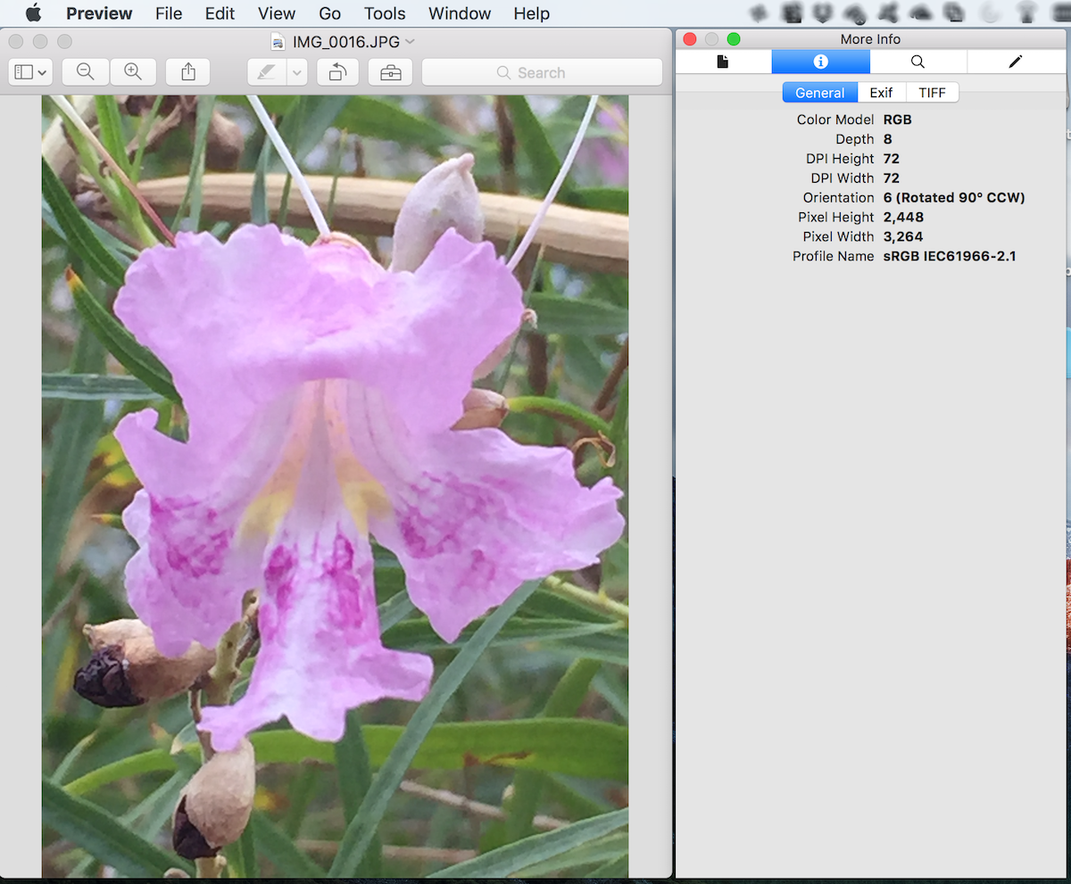 After scenario: Remove location information from photos.