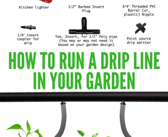 How to run a drip line for your garden plants. The post describes all the details of drip irrigation with pictures.