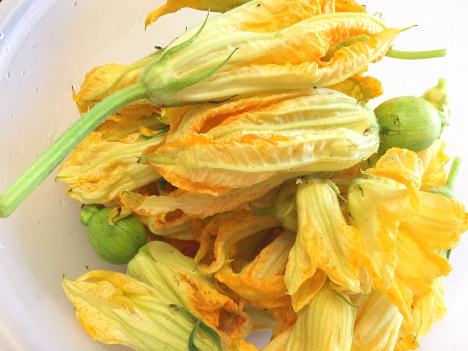 Cleaned pumpkin blossoms before cooking.