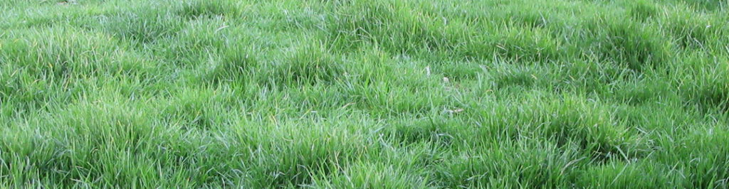 We grew Bermuda grass in our backyard to save money.