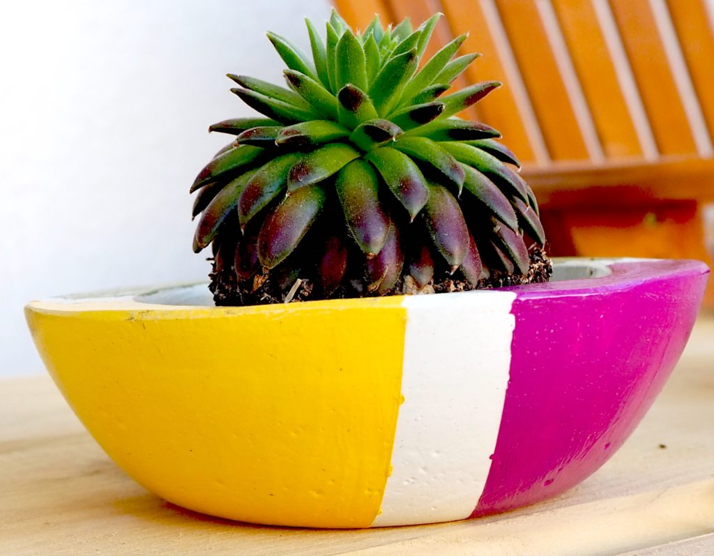 Small succulent pot #succulent #succulentpot #succulentplanter