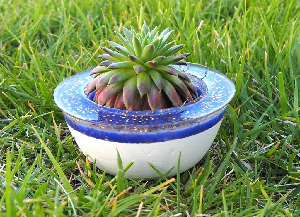 Succulent pot #succulent #succulentpot