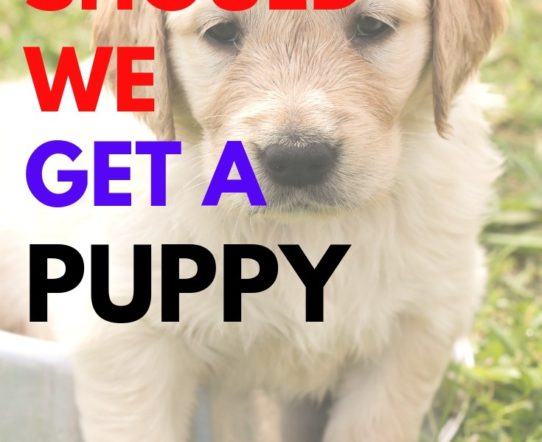 The decision of getting a dog depends on many parameters. A family needs to verify if the dog will receive proper care and attention. #family #dogs #pet