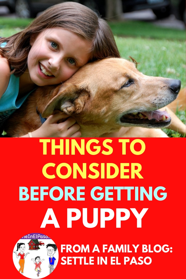 The decision of getting a puppy depends on many parameters. A family needs to verify if the dog will receive proper care and attention. #family #dogs #pet | should I get a dog | getting a dog | getting a puppy |  getting a puppy tips | pet tips |